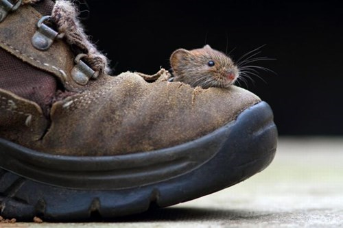 shoes,cute,mice,squee,home,sole