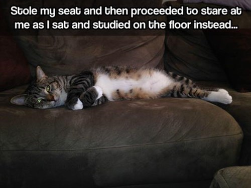 It Was the Cat's Seat All Along