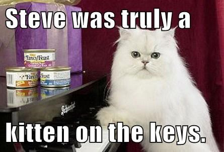 Steve was truly a  kitten on the keys.