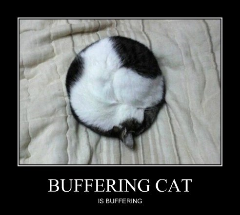 BUFFERING CAT