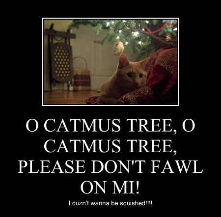 O CATMUS TREE, O CATMUS TREE,  PLEASE DON'T FAWL ON MI!