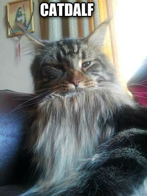 You Shall Not MEOW