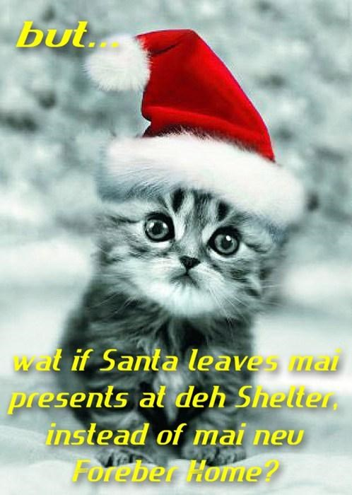 Don't worry kitteh, Santa knows where to find yu