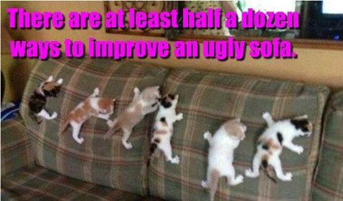 Cats,cute,funny,kitten,sofa