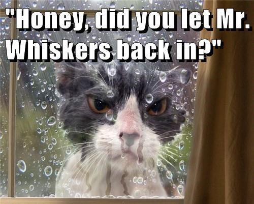 """Honey, did you let Mr. Whiskers back in?"""