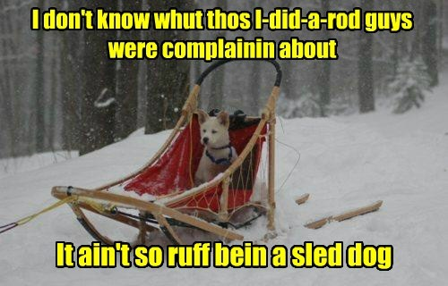Some Sled Dogs Have it Eaasy
