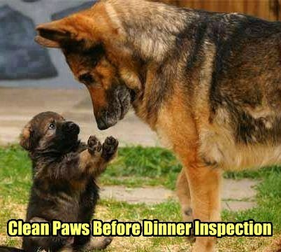 Clean Paws Before Dinner Inspection