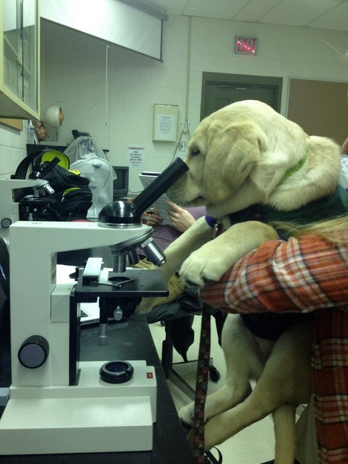 animals,dogs,funny,science,microscope