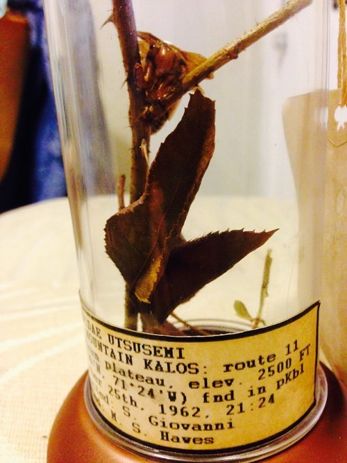 """This """"Cursed Museum Specimen"""" is One of the Coolest Birthday Presents for a Pokémon Fan"""