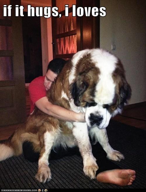 dogs,hugs,st-Bernards
