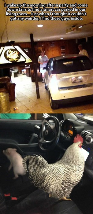 car,crazy,funny,Party,chickens,pig