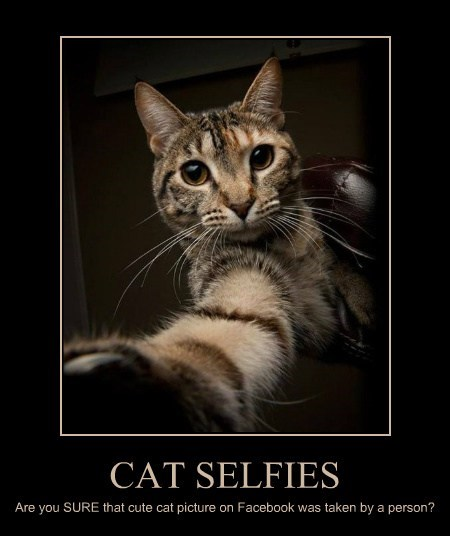 CAT SELFIES