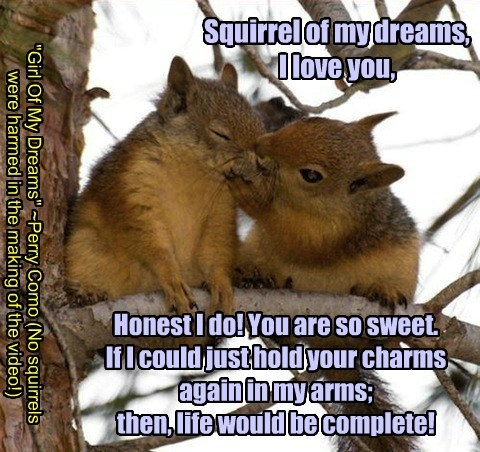 Squirrel Of My Dreams.