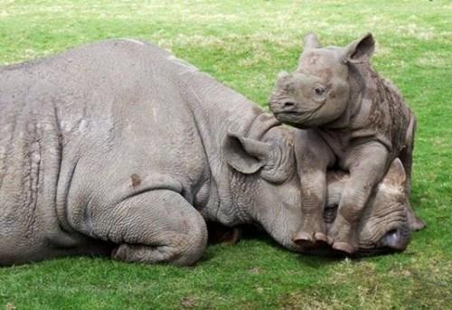 cute,kids,funny,rhinos,mom,tired