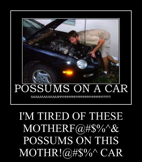 I'M TIRED OF THESE MOTHERF@#$%^& POSSUMS ON THIS MOTHR!@#$%^ CAR