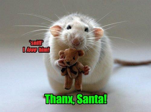 cute,christmas,mice,rats,teddy,santa