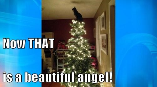 Now THAT is a beautiful angel!