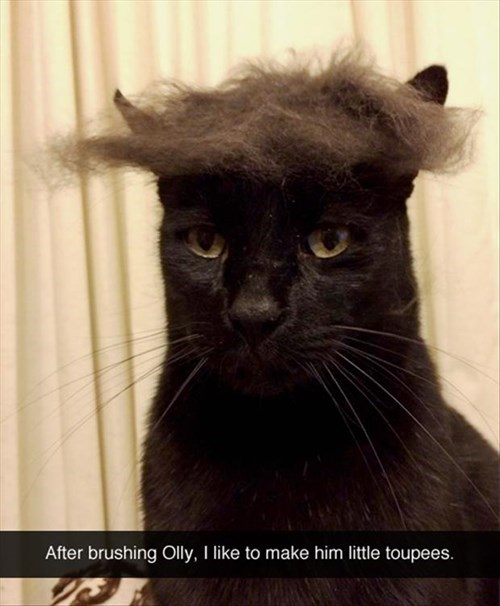 Cats,brush,toupee,wig