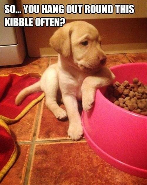 cute,dogs,flirt,puppies