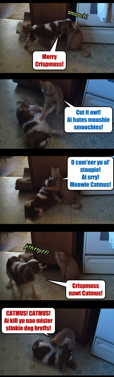 Crispmuss Catmus at allcat's house. Starring Buckey and Pepsi.