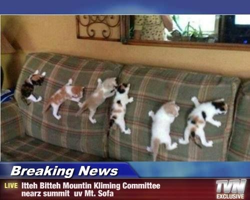 Breaking News - Itteh Bitteh Mountin Kliming Committee nearz summit  uv Mt. Sofa