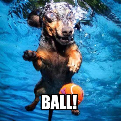 cute,ball,dogs,goggles,pool