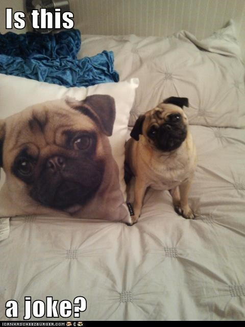 dogs,joke,Pillow,print
