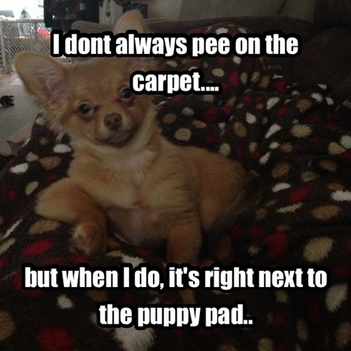 dogs,peeing,most interesting man in the world,puppy pad