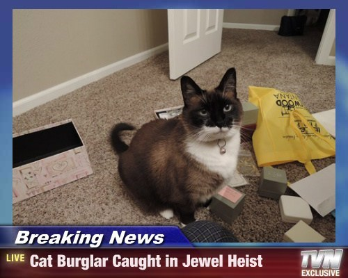 Breaking News - Cat Burglar Caught in Jewel Heist