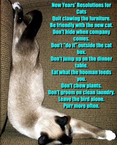 "New Years' Resolutions for Cats Quit clawing the furniture. Be friendly with the new cat. Don't hide when company comes. Don't ""do it"" outside the cat box. Don't jump up on the dinner table. Eat what the hooman feeds you. Don't chew plants. Don't groom on"