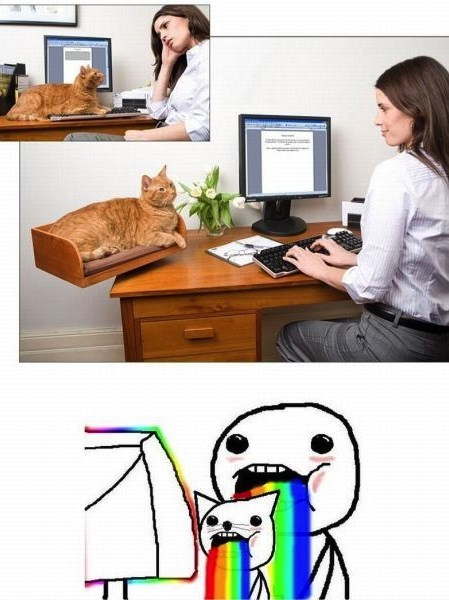 Cats,animals,puking rainbow