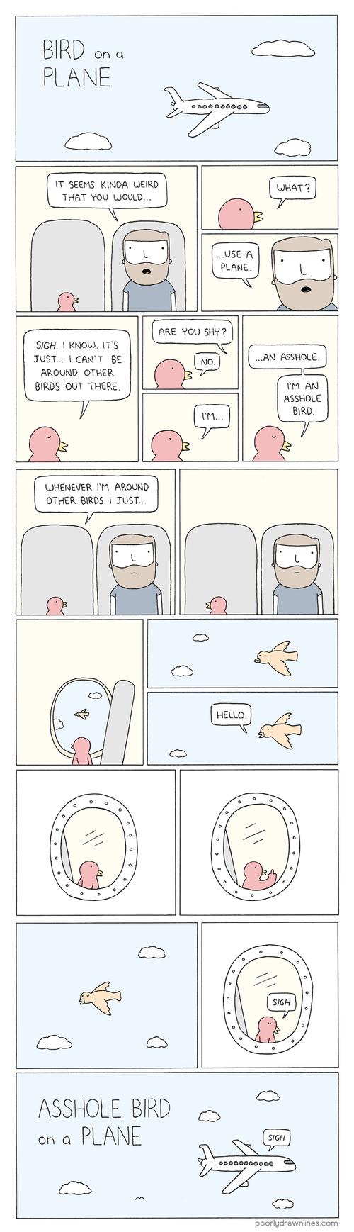 birds,planes,web comics