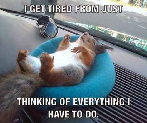 stressed,squirrels,tired