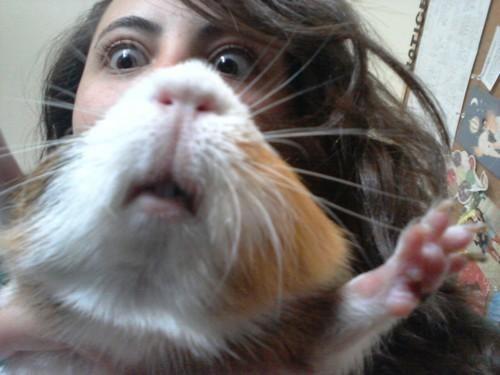 guinea pigs,photobomb