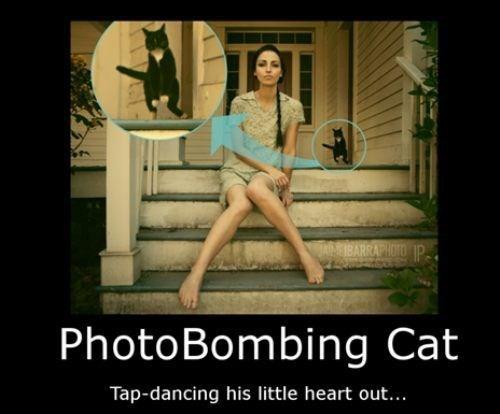 cat,funny,tap dancing,photobomb
