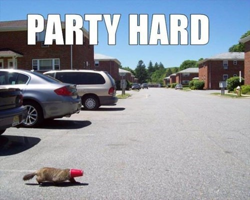 beaver,crunk critters,funny,Party,wtf,after 12,g rated