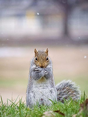 This Shivering Squirrel Does Not Want Winter Storm Hercules!