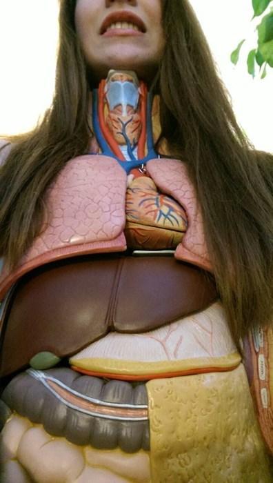 Nice Organs!