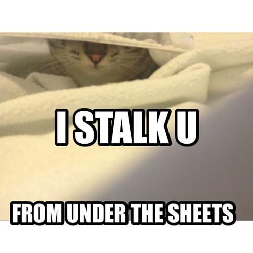 Cats,funny,sheets,stalk