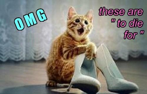 Shoe kitty