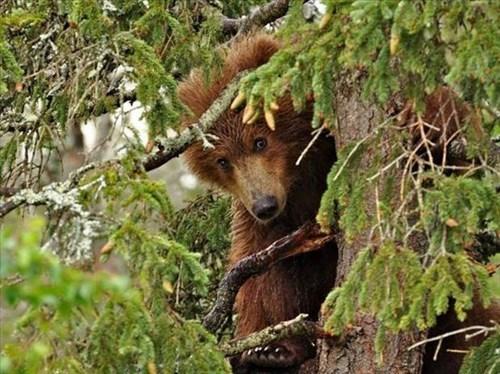 cute,bears,peek a boo,trees