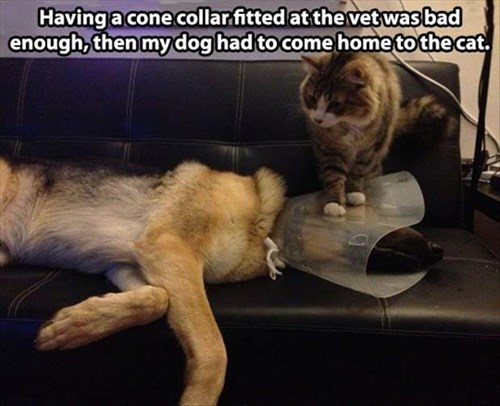 Cats,dogs,cone of shame,mean