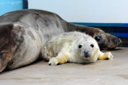 This Pup Gets the Seal of Cuteness Approval