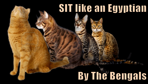 SIT like an Egyptian  By The Bengals