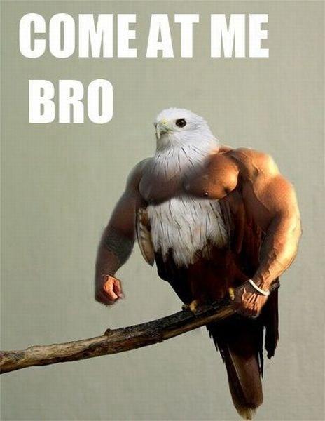come at me,birds,bros,photoshop,North Korea