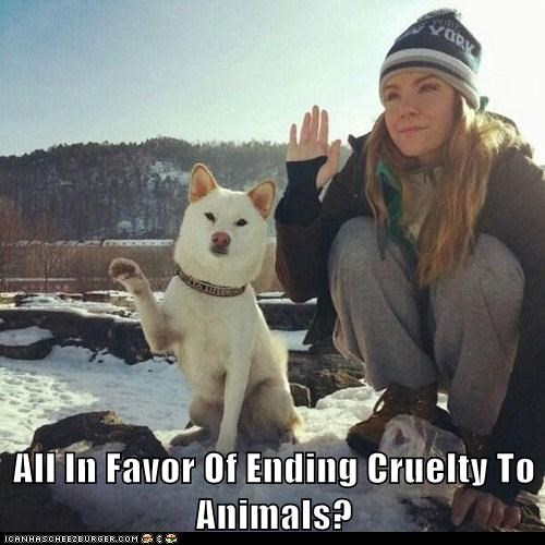 All In Favor Of Ending Cruelty To Animals?