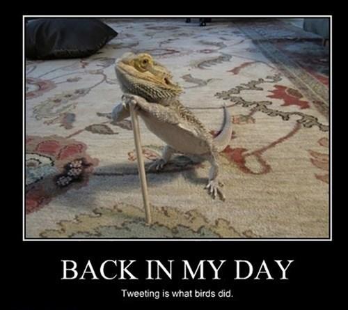 old,twitter,birds,lizard,funny
