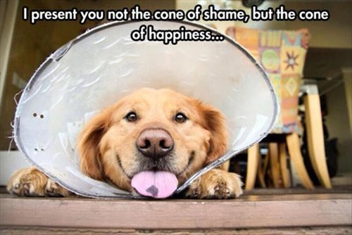 cute,dogs,cone of shame,happy,smile