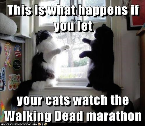 This is what happens if you let  your cats watch the Walking Dead marathon