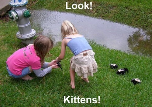 kitten,skunks,kids,stink,funny,rain